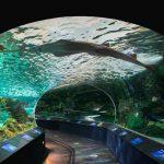 tram through aquarium