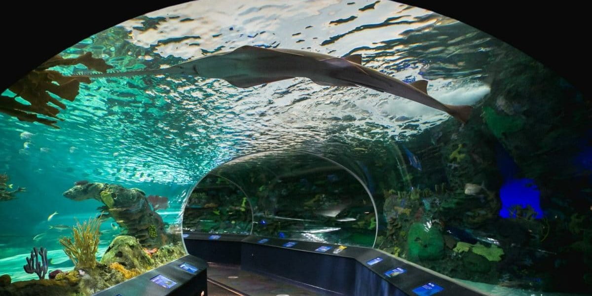 tram through aquarium