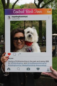 A photo of a happy dog with a person at the Top Dog Tours Central Park fundraiser.