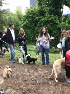 A photo of happy dogs with peopleat the Top Dog Tours Central Park fundraiser.