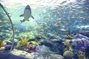 shark in aquarium