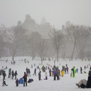 winter sledding in Central Park