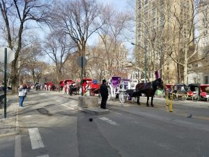 Horse carriages in central park